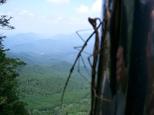 英彦山を背景に…